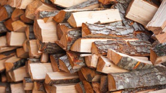 В России резко увеличились продажи дров