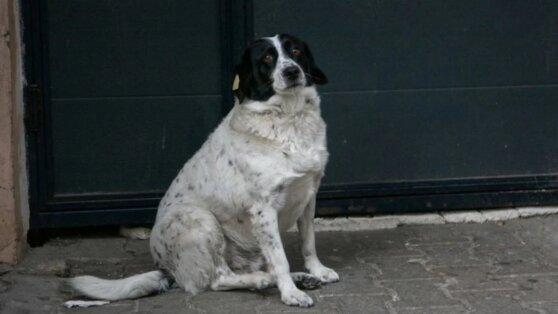 В Грузии бездомный пес защитил детсадовцев