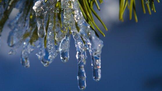 Синоптики пообещали раннюю весну в Москве и Петербурге