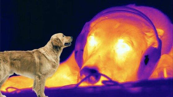 Ученые обнаружили уникальную особенность собачьего носа
