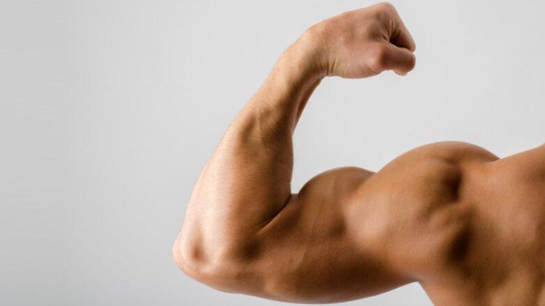 Мускулы мышцы бицепс