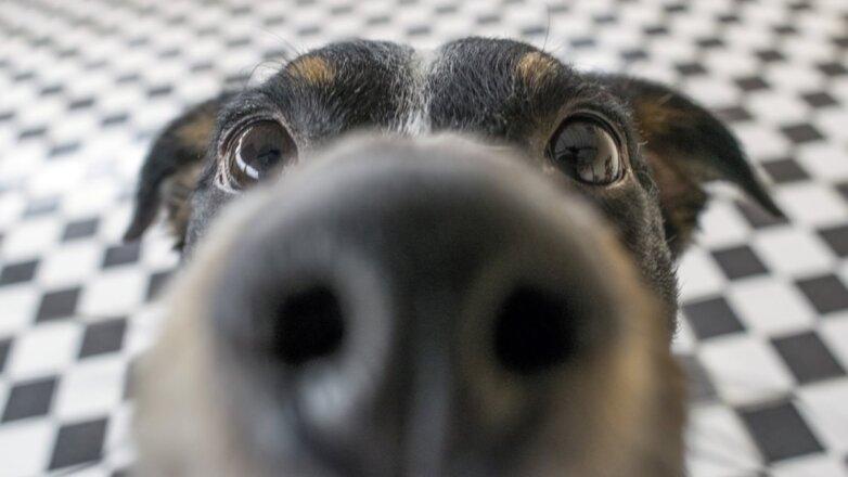 Собака собачий нюх нос
