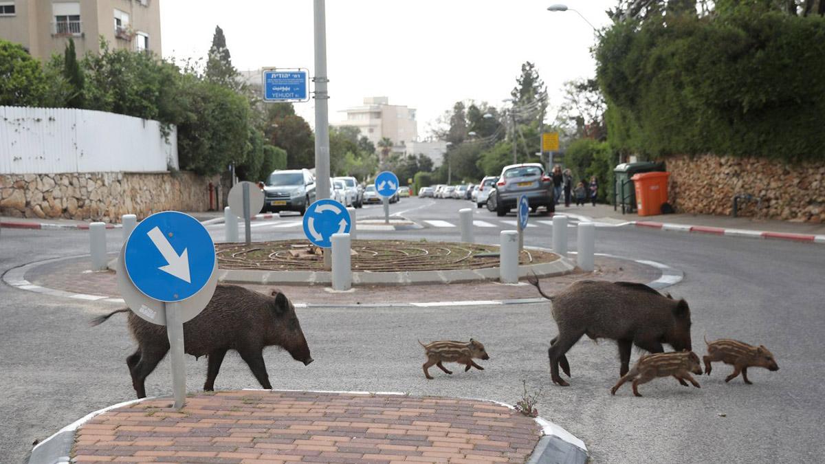 Тапиры на улицах города