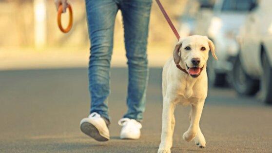 Москвичам разрешили выгуливать собак и выносить мусор без спецпропусков