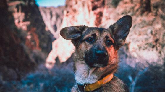В Финляндии собак научили выявлять больных коронавирусом