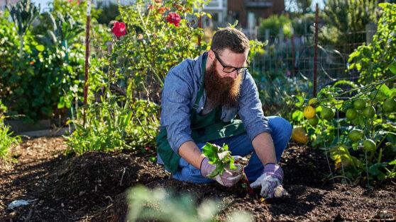 Лопаты в сторону: какие девайсы облегчат жизнь садоводу-любителю