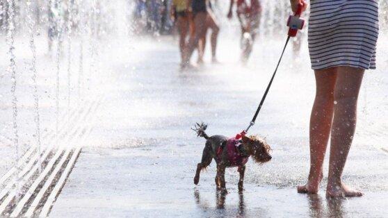 В Москве и Петербурге ожидается жаркая, но дождливая погода
