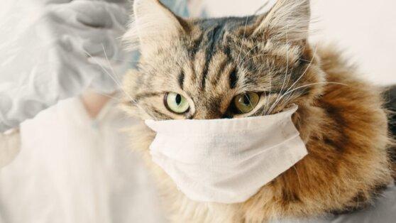 В России кошку отправили на карантин из-за коронавируса
