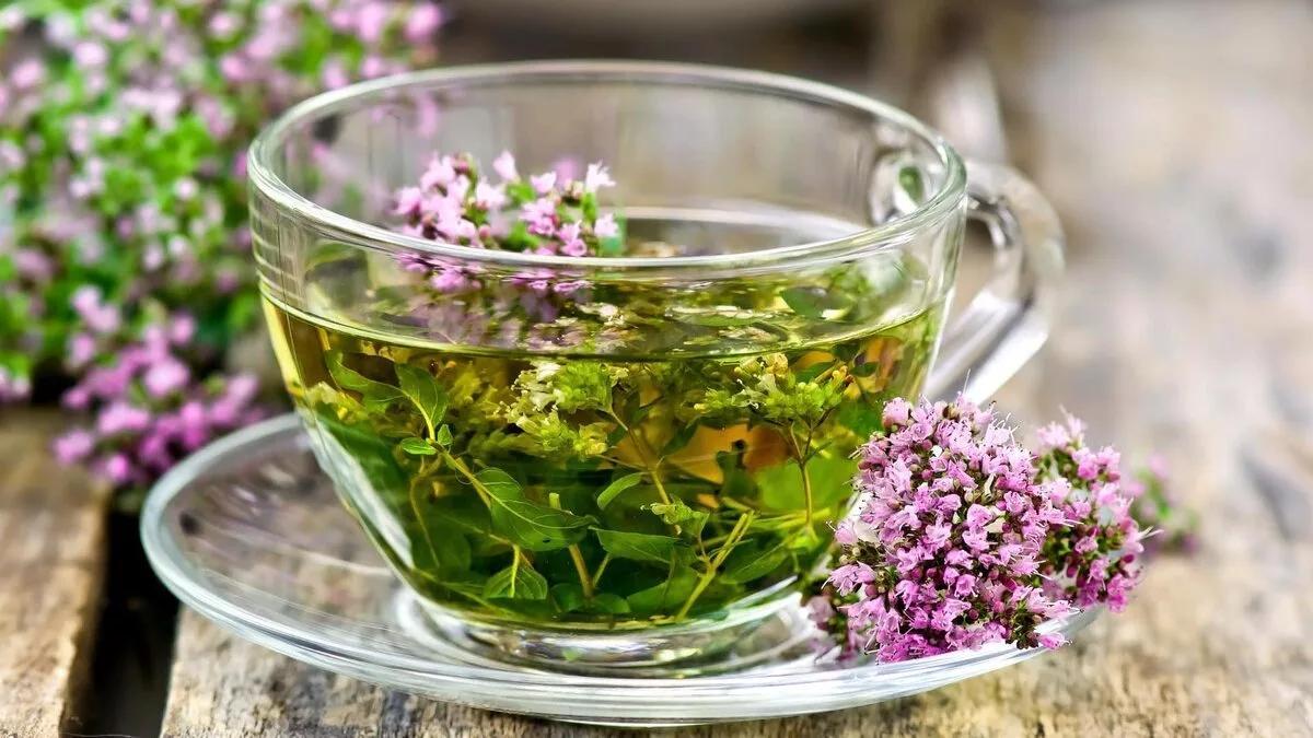 валериана лекарственная чай