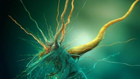 У коронавируса обнаружили «зловещие щупальца»
