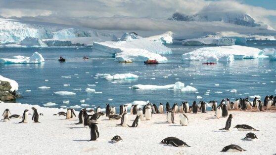 В Антарктиде зафиксировали температурный рекорд