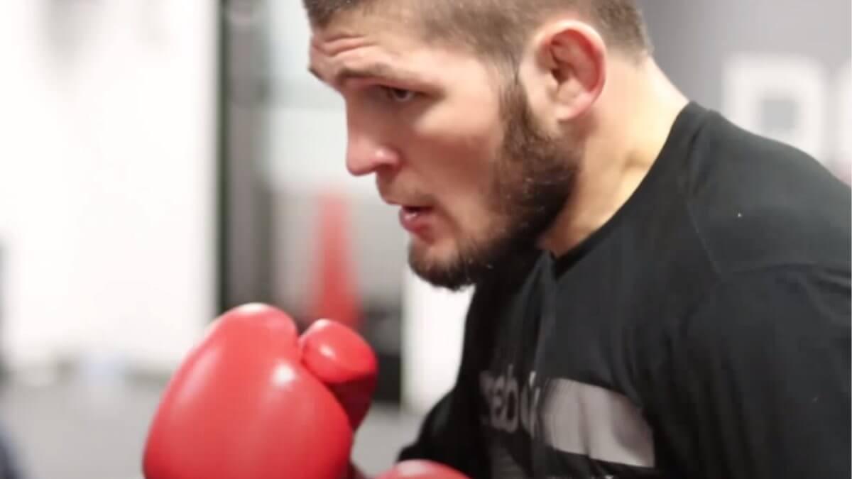 Хабиб Нурмагомедов тренировка боксёрские перчатки