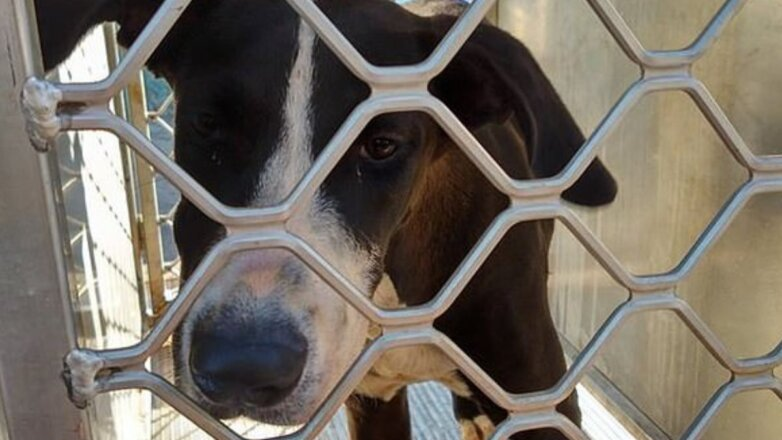 Хозяин нашел собаку через пять лет