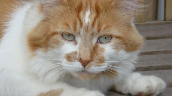 В Англии скончался старейший в мире кот