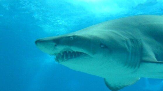 Большая белая акула убила подростка на глазах у родителей и друзей