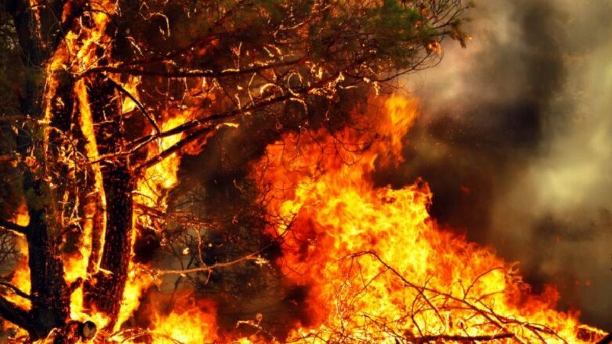 Лесной пожар один