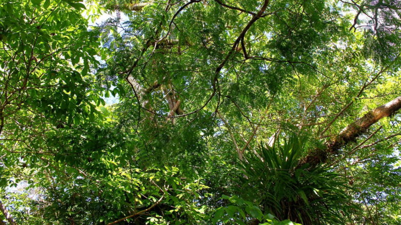 Тропический лес Амазонии