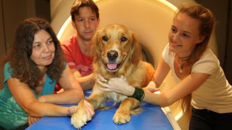 Собака и исследователи
