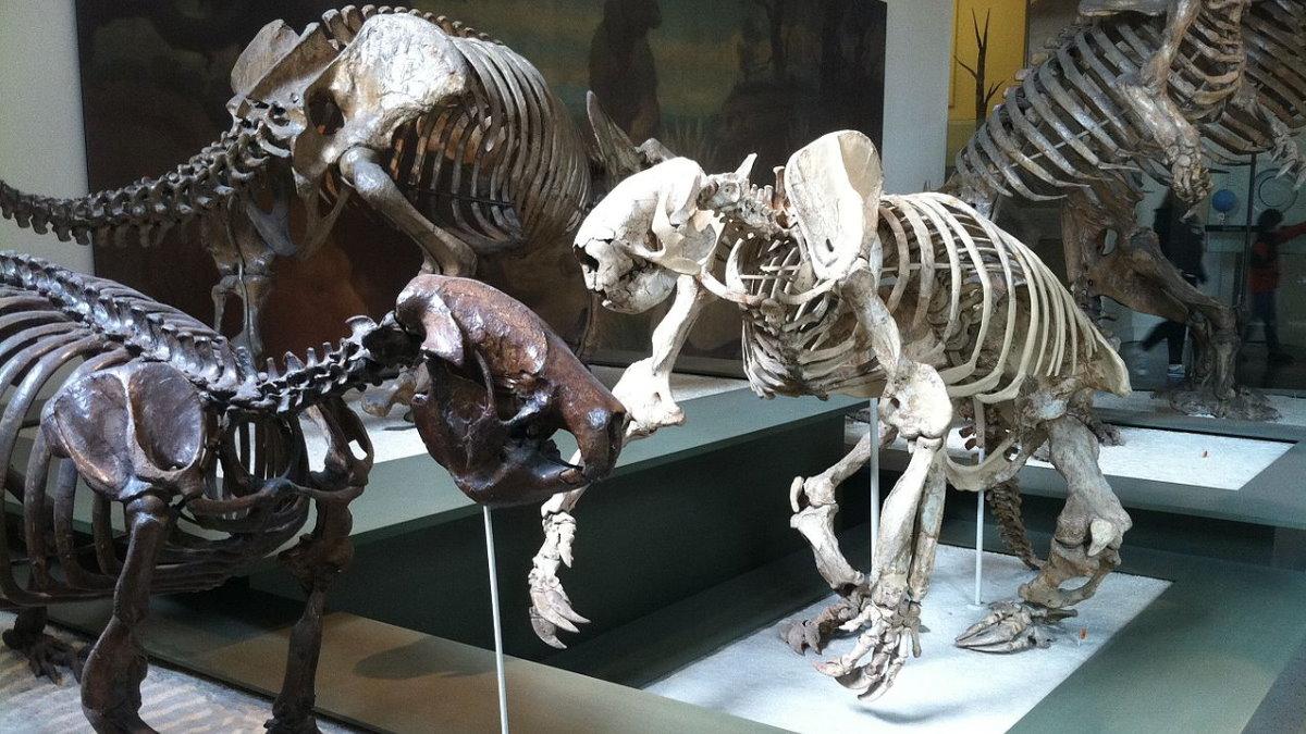 Гигантский ленивец остатки гигантских ленивцев кости