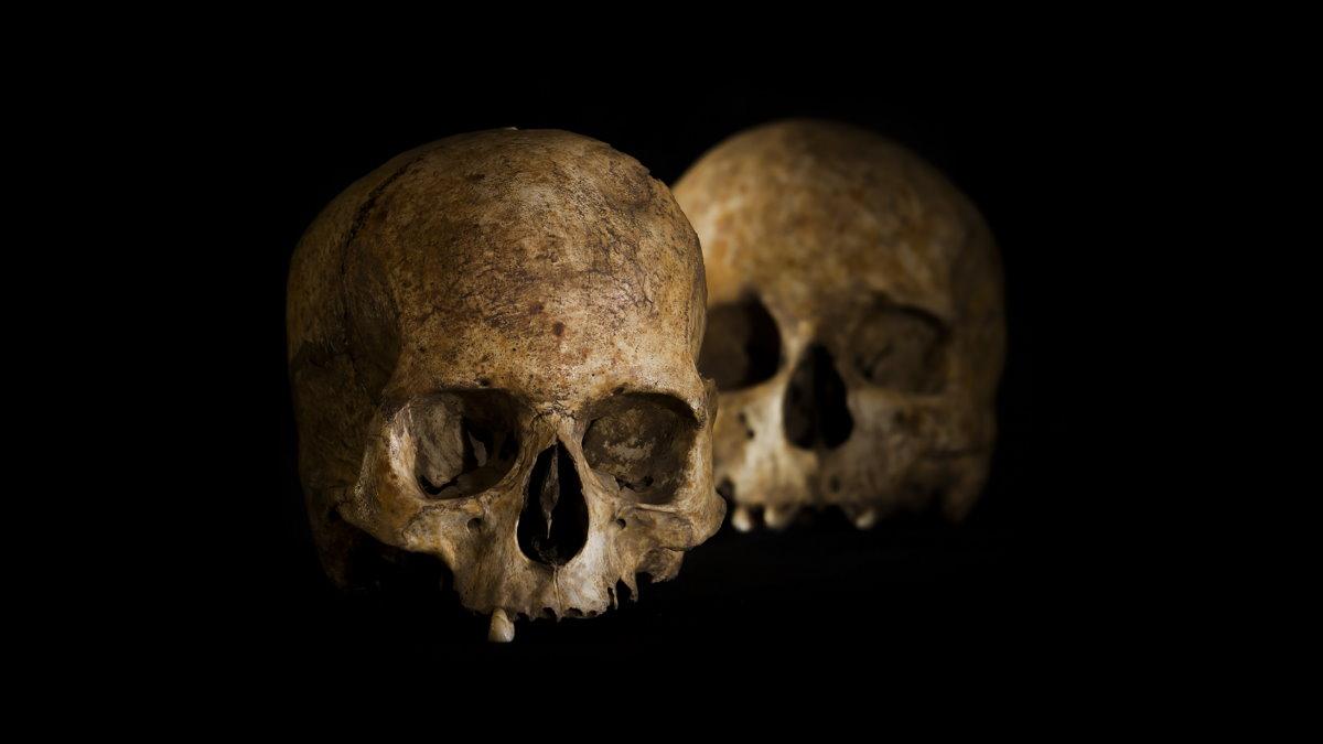черепа археология раскопки