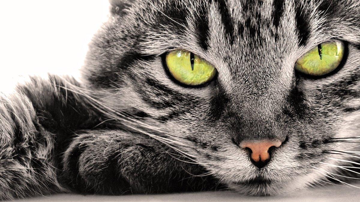 кошка глаза