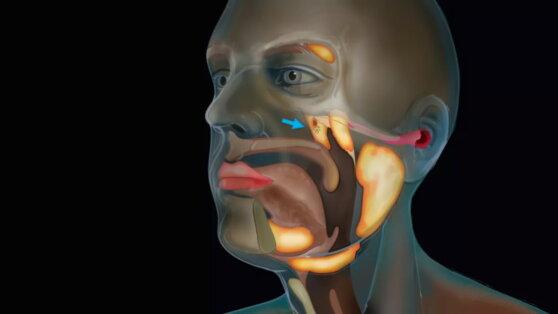 Ученые случайно обнаружили новый орган в горле