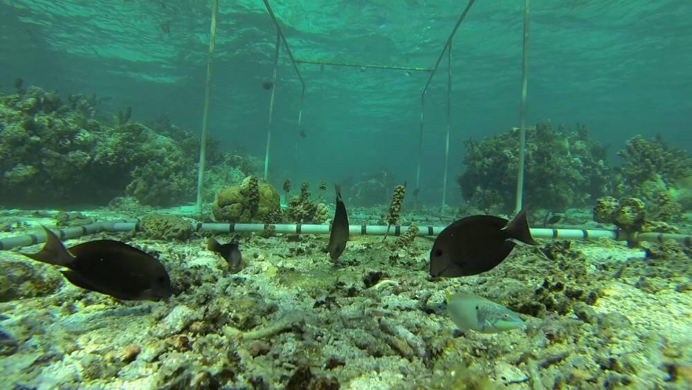 рыбы коралловый риф