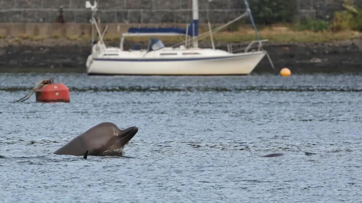 Северный кит-афалина у берега