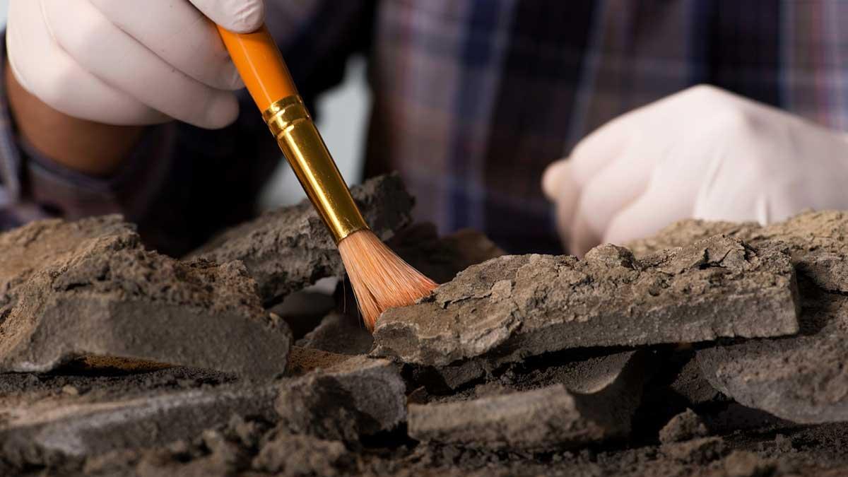 археологические находки останки find archeology remain