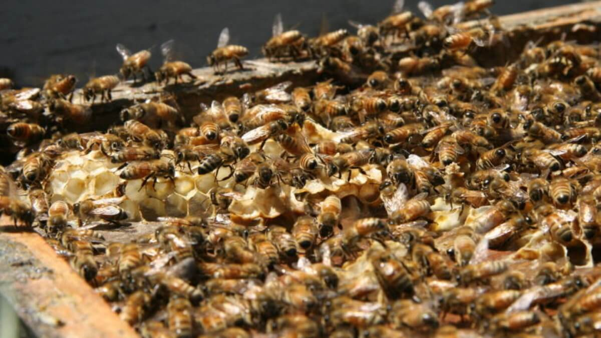 Пчёлы улей