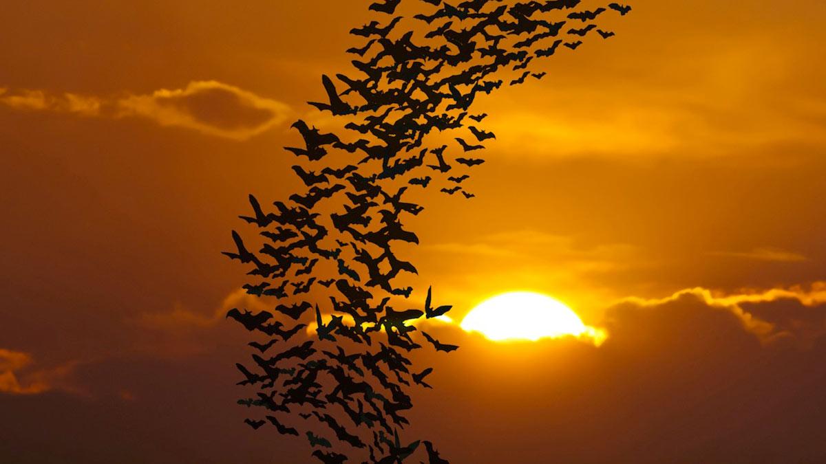 летучие мыши стая закат