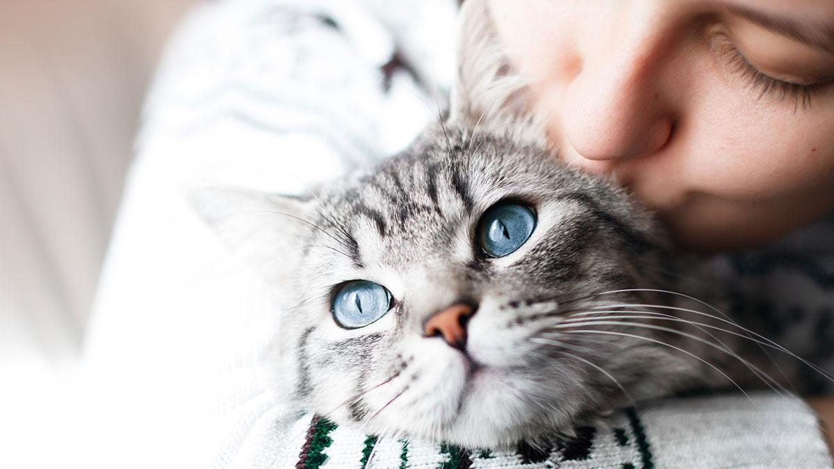девушка целует кошку питомцы