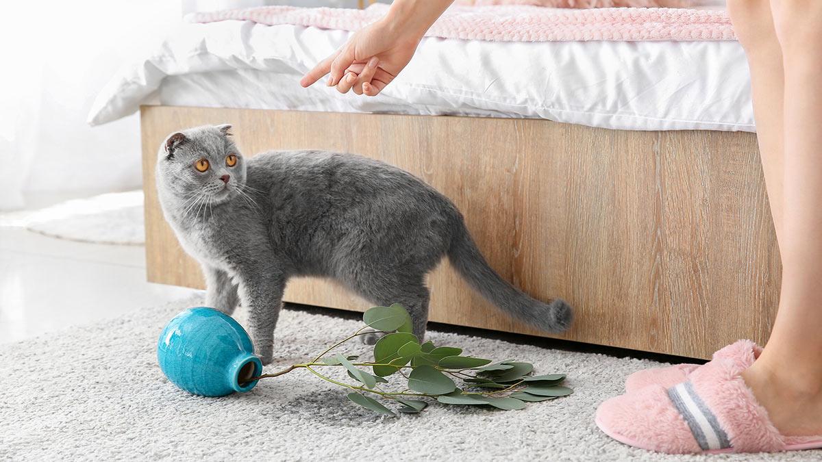 Непослушная кошка