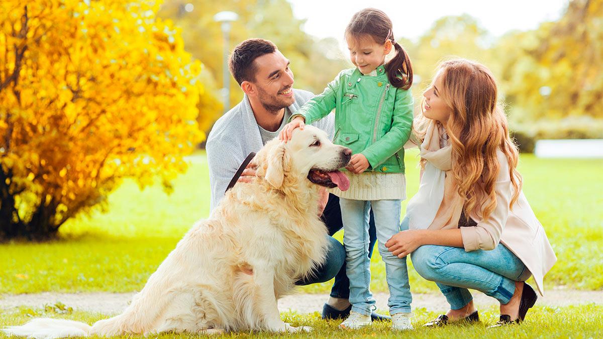 семья девочка собака