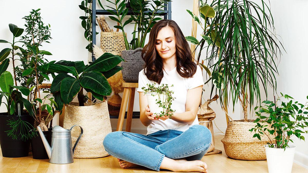 горшки с домашними растениями