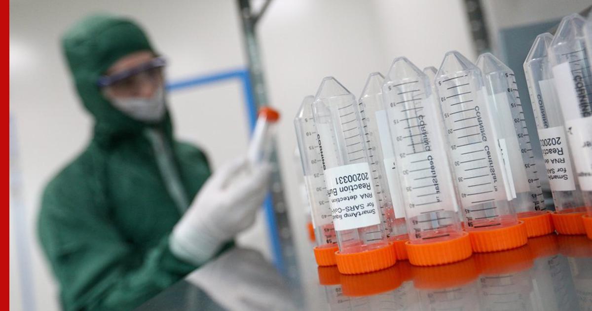 В России впервые обнаружен редкий вид опасных хантавирусов