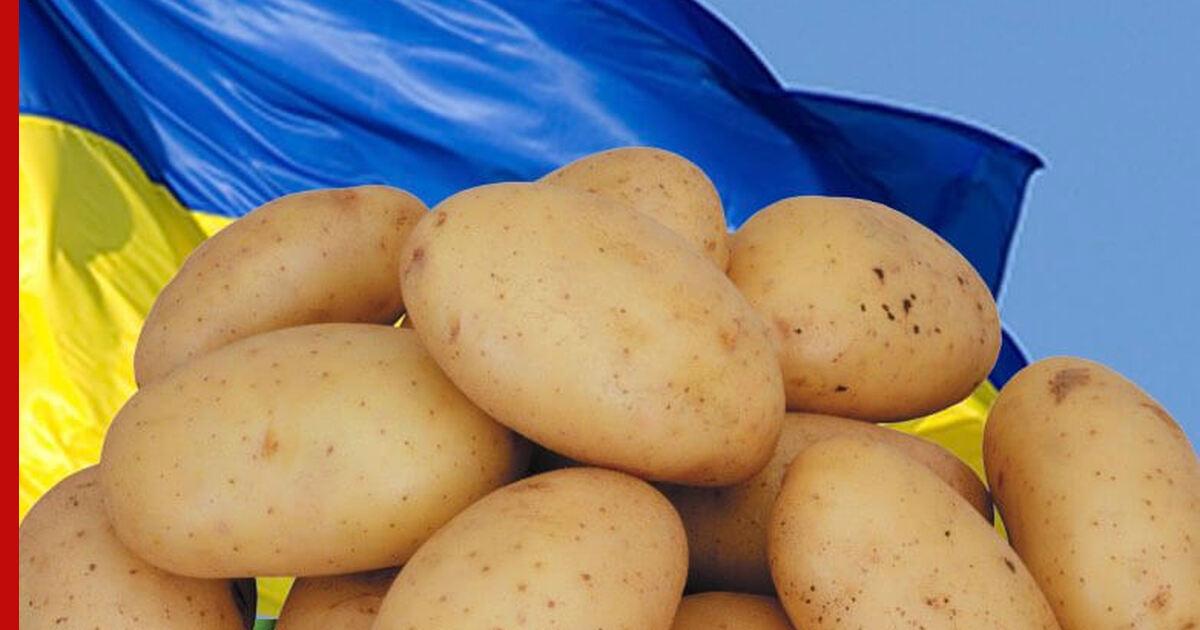 Интернет Магазин Украины Картофеля